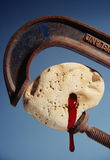 Bloed van een Steen Stock Fotografie