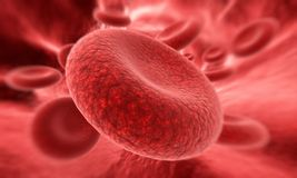 Bloedcel in nadruk Stock Afbeelding