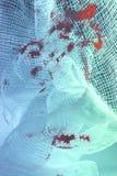 Bloedig weefsel - verband Royalty-vrije Stock Afbeelding