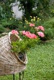 Bloedige geranium Royalty-vrije Stock Afbeeldingen