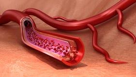 Bloedvaten gesneden macro met erytrocieten vector illustratie
