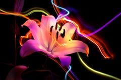 Bloei een lelie: aroma van nacht vector illustratie