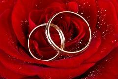 Bloei een roos, twee trouwringen Royalty-vrije Stock Afbeelding
