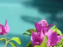 Bloei het blauwe water van de pool Royalty-vrije Stock Foto