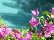Bloei het blauwe water van de pool Royalty-vrije Stock Afbeeldingen