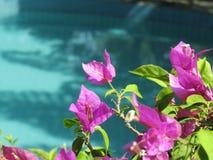 Bloei het blauwe water van de pool Stock Afbeelding
