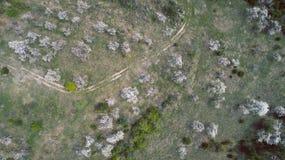 Bloei Plum Trees In The Mountains met Wegsporen Royalty-vrije Stock Foto's