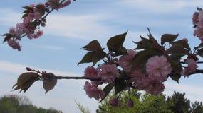 Bloei tegen de blauwe hemel Stock Foto