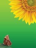 Bloei zonnebloem en vlinder op een groene backgrou Stock Afbeeldingen