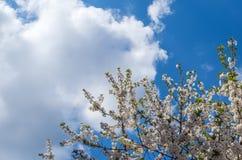 Bloeiboom in bewolkte hemel royalty-vrije stock foto's