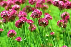 Bloeiend bloembed Stock Afbeelding