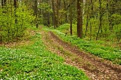 Bloeiend bos stock foto