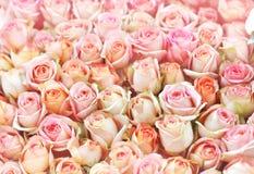 Bloeiend de bloemenboeket van abrikozenrozen stock foto's