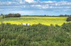 Bloeiend die canolagebied met bos wordt ontworpen Royalty-vrije Stock Foto's
