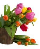 Bloeiende tulpen Stock Afbeelding