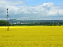 Bloeiend gebied van koolzaad met elektrische mast stock foto