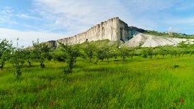 Bloeiend gebied van papaver op achtergrond van witte klippen schot Hoogste mening van mooi groen gebied met papaverbloemen bij stock videobeelden