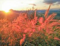 Bloeiend gras en zonsopgang Stock Afbeelding