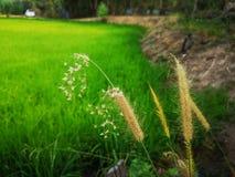 bloeiend gras j groene fiields op eah royalty-vrije stock afbeeldingen