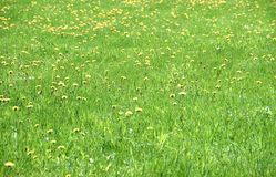Bloeiend groen gebied Stock Afbeelding