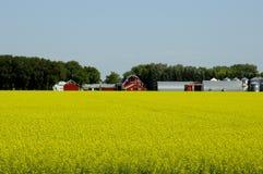 Bloeiend Landbouwbedrijf Stock Afbeeldingen