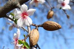 Bloeiend is lente. Stock Afbeeldingen