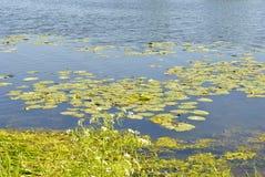 Bloeiend meer in de zomer stock foto's