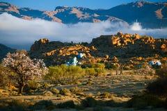 Bloeiende amandel in Tafraout, Marokko Stock Foto's