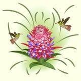 Bloeiende ananas en kolibries royalty-vrije illustratie