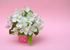 Bloeiende appel in decoratieve kleine emmer op een roze achtergrond Stock Foto