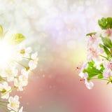 Bloeiende appelboom tegen de hemel Eps 10 Stock Fotografie