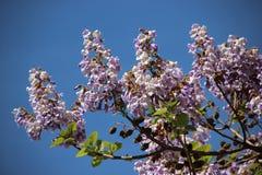 Bloeiende Blauwe Wilde Bloemen royalty-vrije stock foto's