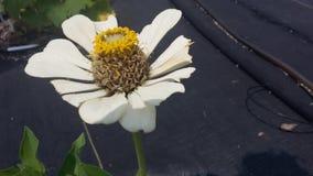 Bloeiende bloem Royalty-vrije Stock Afbeeldingen