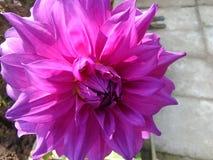 Bloeiende bloem Stock Foto