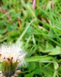 Bloeiende bloem Stock Foto's