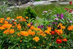 Bloeiende bloem bij oever van het meer Stock Foto