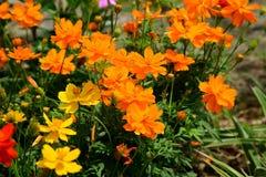 Bloeiende bloem bij oever van het meer Stock Foto's