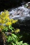 Bloeiende bloem op de boom met het runnen van beek op de achtergrond Stock Afbeelding