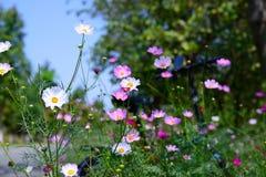 Bloeiende Bloemen Royalty-vrije Stock Afbeelding