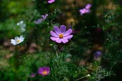 Bloeiende Bloemen Royalty-vrije Stock Afbeeldingen