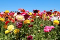 Bloeiende bloemen Stock Afbeelding