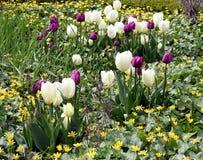 Bloeiende Bloemen Stock Foto