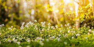 Bloeiende Bloemen Stock Foto's
