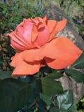 bloeiende bloemen in de zon royalty-vrije stock foto
