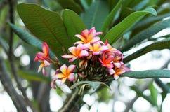 Bloeiende bloemen en groene bladeren Stock Foto's