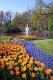Bloeiende bloemen in park Stock Foto's