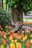 Bloeiende bloemen, tulpen en boomboomstam met klimop in Keukenhof-park in Nederland, Europa royalty-vrije stock afbeeldingen