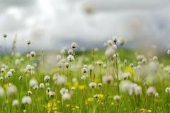 Bloeiende bloemen in weide Stock Foto
