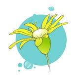 Bloeiende bloemillustratie Royalty-vrije Stock Fotografie