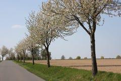 Bloeiende bomen Stock Fotografie